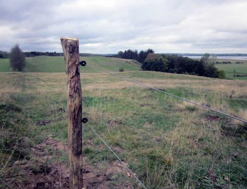 Naturhegn af Natura 2000